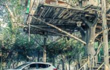 باغ تالار خانه درختی اندیشه